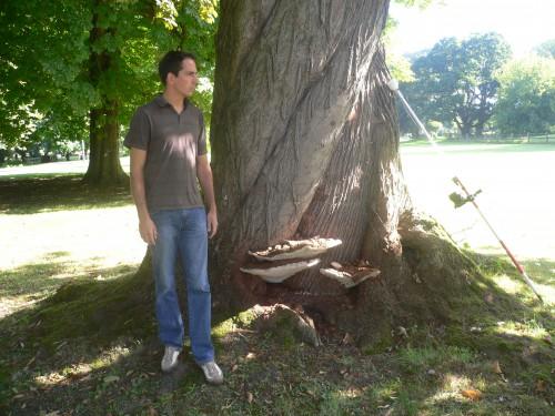 Le champignon parasite Ganoderma au pied de l'arbre. A droite l'antenne GPS qui a permis de situer exactement les arbres.