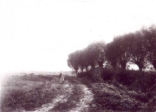 Les saules du Chemin vert, date indéterminée Source A.I.T. Photothèque Vaulx