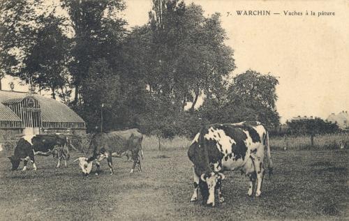 WARCHIN - vaches à la pâture - Coordonnées GPS • Nord : 50 36 49 • Est : 3 25 03